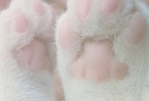 i have an obsession with paws