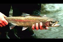 Рыбалка на форель. Ловля на спиннинг в Архангельской…