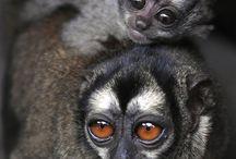 Animal Babies with Mom