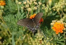 Gardening for Pollinators / Pollinator friendly botanical inspirations