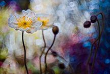 Цветы / Flower