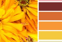 Colour palete ~ Moodboards