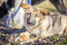 Жизнь собачья / Собаки ищут дом