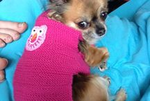 Chihuahua Clothing / Selfmade Chihuahua Clothing
