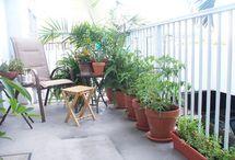 patio garden / by Marlene Kears