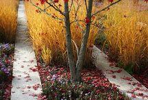 garden - autumn