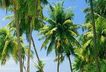 Palmy a pláž