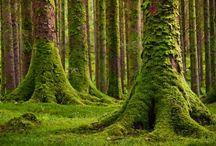 Moss moss moss