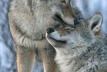 動物 / かっこいい動物や穏やかな動物を見ると癒される
