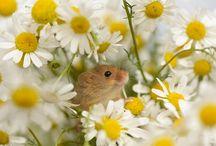 Myšky, zejména ty drobné :)