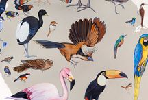 Birding / Interesting facts and images of the birds we see around us :-)