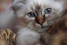 Gatinhos lindos e maravilhosos