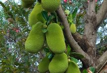 Fantastic fruits and trees