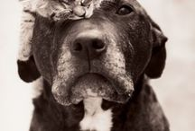 Cat and Dog Pals