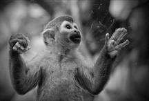 Ganadores IX Concurso de Fotografía El Fotón 2012 / Las 9 fotos ganadoras de las 9 categorías del concurso. El resto de fotos ganadoras, hasta 24 por categoría, están en http://elfoton.es/gallery/v/Ganadores+IX+Concurso+de+Fotografia+Elfoton+2012/# / by Vagamundos