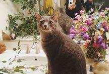 Instagram https://www.instagram.com/p/BOEMF_4BoOu/ December 15, 2016 at 11:58PM @khaleesimotherofmountains @aa_marshall_arts #cats churrasco