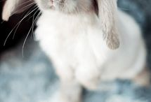 Bunnies  / Pics of lovely bunnies