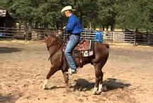 Horse Training.