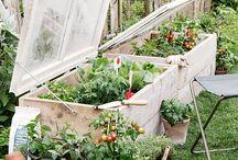 { garden inspiration }