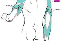 Anatomía m
