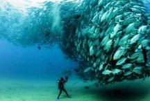 Amazing Creatures!!! / by Amanda LaRue-Warren