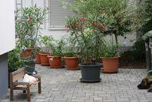 Garten / Garten, Gartendeko, Blumen, Teich