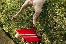 Truus in the bush... HAHAHA