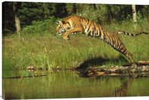 Gifts for Wild Animal Lovers, Wildlife Lovers / https://www.explosionluck.com/collections/wildlife-wall-painting  Unique gifts for wild animals lovers, wildlife lovers, nature lovers for all occasions.