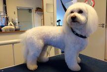 Salon DogLove / Hunde der er klippet i hundesalonen DogLove i Kgs. Lyngby, Kbh N