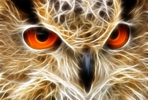 Got a thing for owls