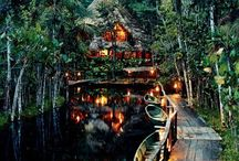 Dream Trip: Amazon Rainforest