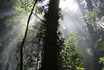 Forest Conservation / Images and photos of forest conservation around the world. / by Green Steve