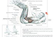 Exercises Anatomy Muscles