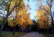 hacettepe #autumn
