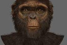 El linaje humano / ¿Tiene sentido la evolución? ¿Tenemos pruebas de qué venimos?