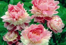 SO BEAUTIFUL OR SO STRANGE FLOWERS
