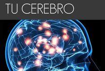 Cerebro actualidades