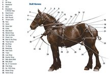 parts of the horse harness