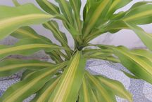 Plantas / Fotos de plantas bonitas que encontrei por aí. =]