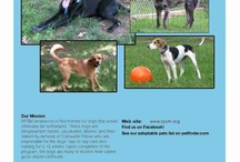RPSM events / I will try to post up coming & ongoing events that help Refurbished Pets of Southern Michigan.