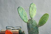 cactus..cutes..succulents / by saras isan