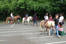 Corporate, School & Festivals / Pony rides are not only for birthday parties but they are great entertainment for corporate functions, field day school events and festivals.