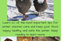 Keeping Livestock