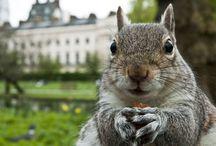 Squirrel / by Satoe Suganami