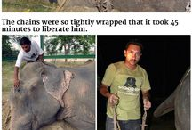 Mans endless cruelty to animals