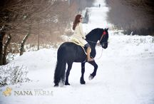 horses / About our horses :)