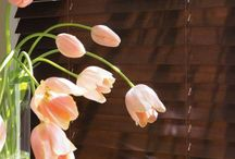 Spring Home Decorating Ideas / Shed some new light on your space this spring. Give your home a fresh new look!