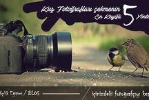 Kuş fotografçılığı