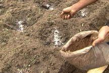 Agricultura, Adulbo