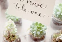 Favours / Examples of how a sign is used to offer favours to wedfing guests